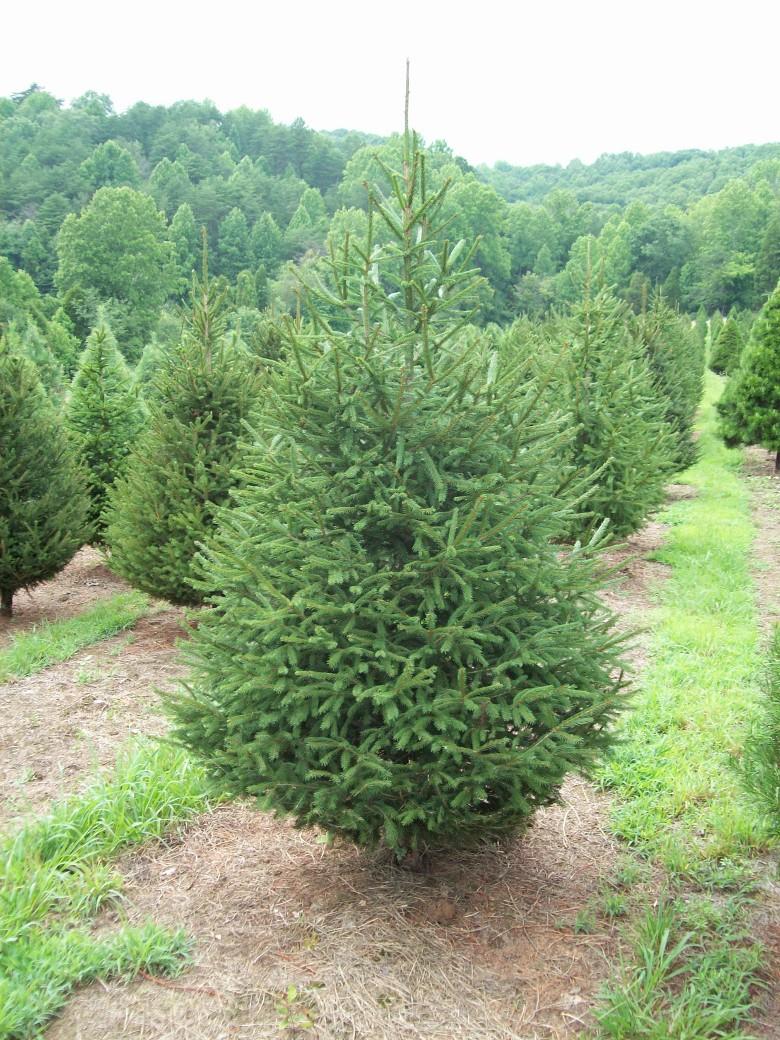 Christmas Tree Bases